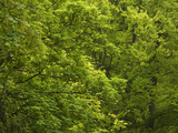 Close-up of Lush Green Trees in the Woods