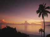 Buy Palm Trees Silhouetted against Sky and Ocean at Sunrise at AllPosters.com