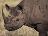 A Close View of a Rhinoceros