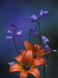 Wood Lily and Harebells, St. Ignace, Michigan, USA