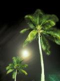 Tropics Palm Trees and Moon