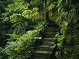 Buy Stone Steps and a Path Cut Through Dense Jungle and Palm Trees at AllPosters.com