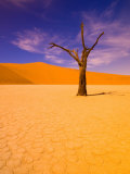 Skeleton Trees in Dead Vlei, Namibia World Heritage Site, Namibia