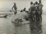 Natives During the Capture of a Hippopotamus