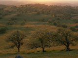 Rolling Foothills of the Sierra Nevada Spotted with Oak Trees near Bakersfield, California