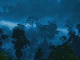 Buy Twilight View of the Rain Forest at AllPosters.com