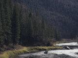 Fishing for Steelhead on the Salmon River