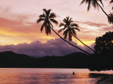 Buy Palms, Trees, and Bather Silhouetted at Sunrise at AllPosters.com