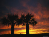 Buy The Silhouette of a Pair of Palm Trees at Sunset at AllPosters.com