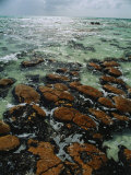 Ancient Stromatolite Reefs Still Flourish in High Saline Shark Bay