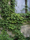 Ivy Climbs a Wall in Milwaukees Third Ward District