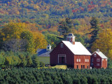 Christmas Tree Farm near Springfield in Autumn, Vermont, USA