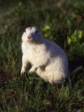 Prairie Dog, South Dakota