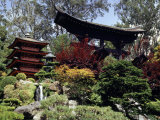Japanese Tea Garden, San Francisco, California, USA