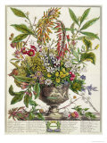 January, from Twelve Months of Flowers, by Robert Furber Giclee Print