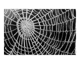 Spider Web Sparkle