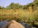 Mokoro through Reeds and Papyrus, Okavango Delta, Botswana