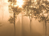 Mist in Tropical Rainforest, Thailand