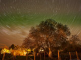 Star Trails Over Walnut Tree, Domain Road Vineyard, Central Otago, South Island, New Zealand