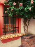 Flowering Hibiscus Near Pink Window, Puerto Vallarta, Mexico