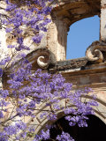 Purple Spring Flowers in Bloom, La Compania de Jesus, Antigua, Guatemala
