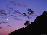 Section of Larapinta Trail Silhouetted in Evening, West Macdonnell National Park, Australia