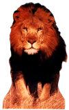 Lion Cardboard Cutouts