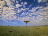 Cumulus Clouds Above Grasslands Dotted with Desert Date Trees Photographic Print