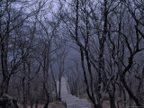 Buy Mountain Forest Path, Mt. Huangshan (Yellow Mountain), China at AllPosters.com