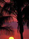 Buy Sunset and Coconut Palms near Malpais, Nicoya Peninsula, Costa Rica at AllPosters.com