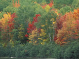 Fall Colors of the Northern Forest, Maine, USA