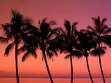Buy Palm Trees at Sunset, Hawaii, USA at AllPosters.com