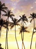 Buy Silhouetted Palms at Sunset, Kamaole Park 1, Maui, Hawaii, USA at AllPosters.com