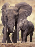 African Elephants, Tarangire National Park, Tanzania Photographic Print