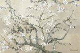 Buy Almond Branches in Bloom, San Remy, c.1890 (tan) at AllPosters.com