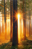 Buy Forest Sunbeams at AllPosters.com