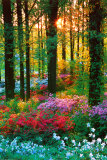 Buy Flower Forest at AllPosters.com