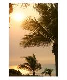 Buy Broome Tropics at AllPosters.com