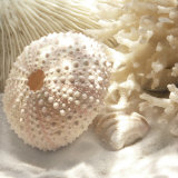 Buy Coral Shell I at AllPosters.com
