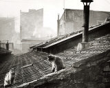 Cats on a Roof, Paris I