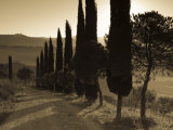 Country Road Towards Pienza, Val D' Orcia, Tuscany, Italy