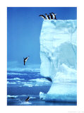 Penguins Diving Off an Iceberg Art Print
