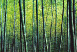 The Bamboo Grove Art Print