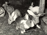 Rabbits at a Farm