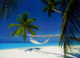 Buy Maldives Island - Hammock at AllPosters.com