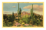Camelback Mountain, Saguaros, Arizona