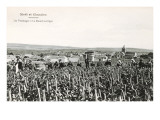 Grape Harvesters, France, Moet et Chandon