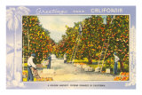 Greetings from California, Orange Grove