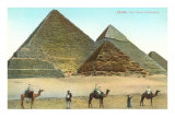 Giza Pyramids, Camels, Egypt
