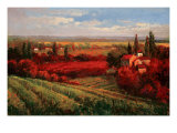 Tuscan Fields of Red